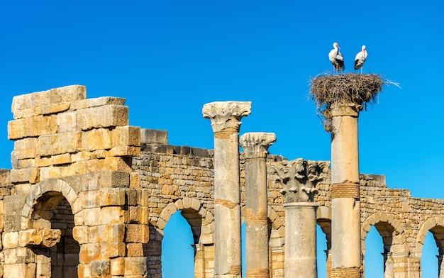 Ruïnes van een romeinse basiliek in volubilis, een werelderfgoed in marokko