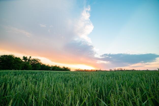 Rusland dorp zonsondergang veld felle zon lentetarwe