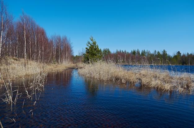 Russische landschap in de lente bos overstromingen van de lente op het meer