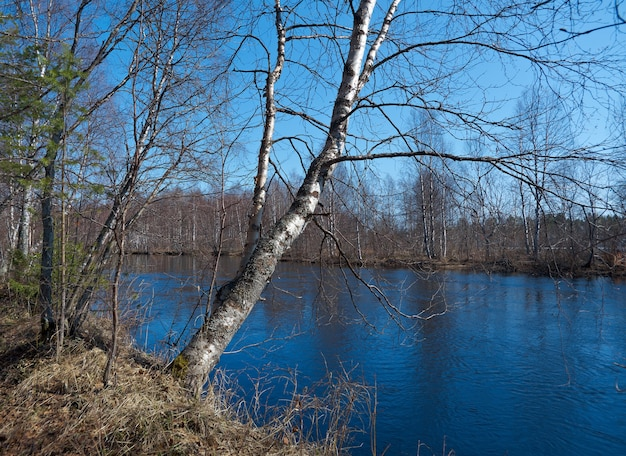 Russische landschap overstromingen van de lente op de rivier arkhangelsk regio