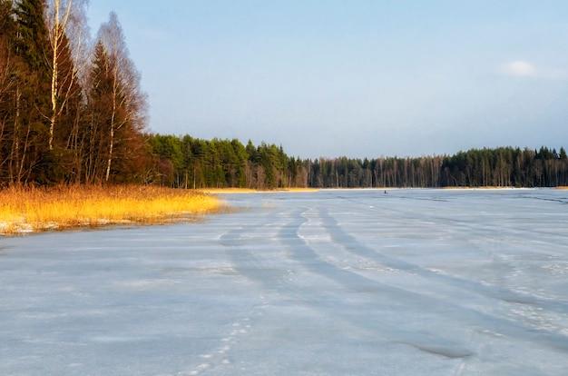 Russische vroege lente in het bos aan het seligermeer