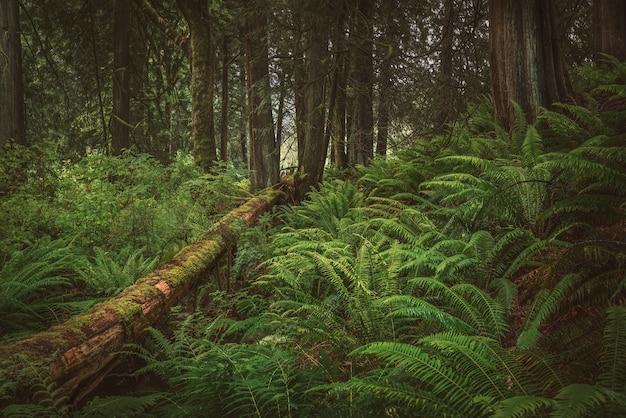 Rustgevend in het bos