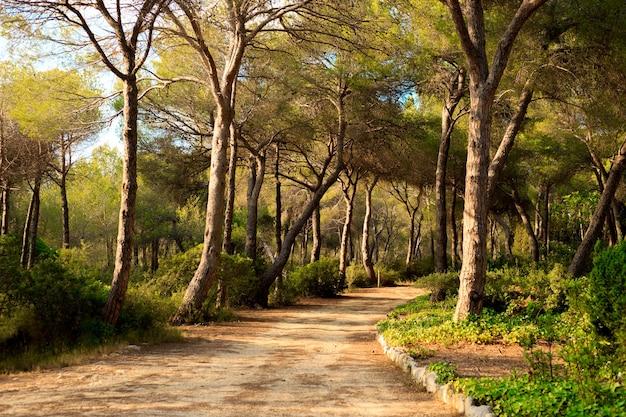 Rustig pad door een dennenbos in spanje bij zonsondergang.