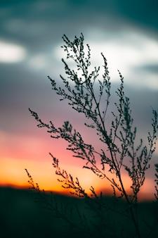 Rustig zicht op zonsopganglicht