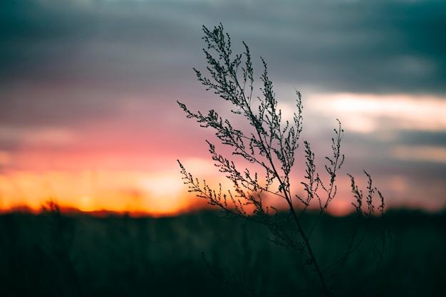Rustig zicht op zonsopganglicht Premium Foto