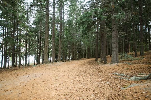 Rustige buitenbossen natuur. groene bomen in licht. groene natuur