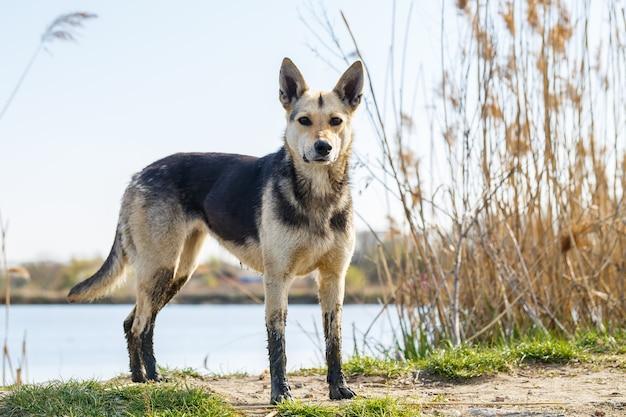 Rustige hondenrust in het groene zonlichtlandschap, rust in het park, rest van huisdieren in de natuur, rust met dieren, toeristische reis