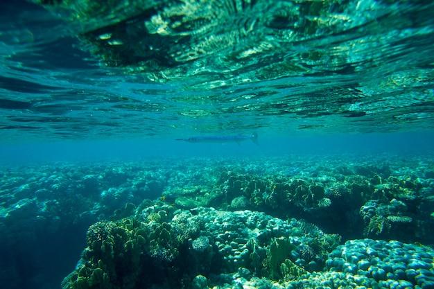 Rustige onderwaterscène met exemplaarruimte
