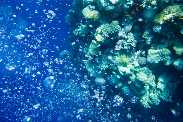 Rustige onderwaterscène met kopieerruimte