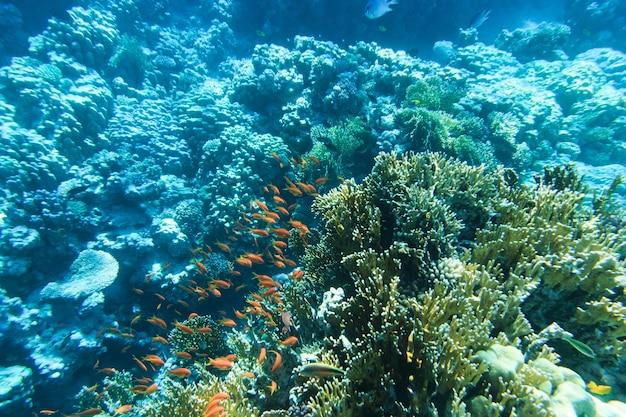 Rustige onderwaterscène