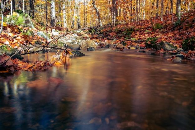 Rustige vijver in een bos met gevallen takken in de herfst