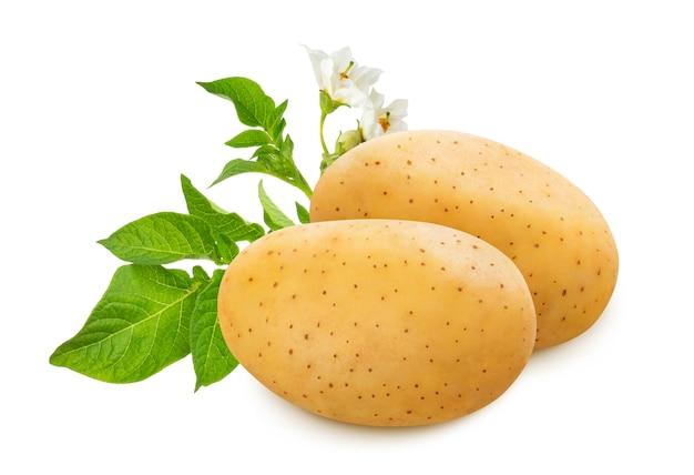Ruwe aardappel met groene die bladeren en bloemen op witte achtergrond worden geïsoleerd
