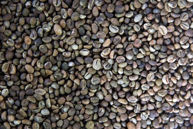 Ruwe kopi luwak-koffiebonen op koffielandbouwbedrijf