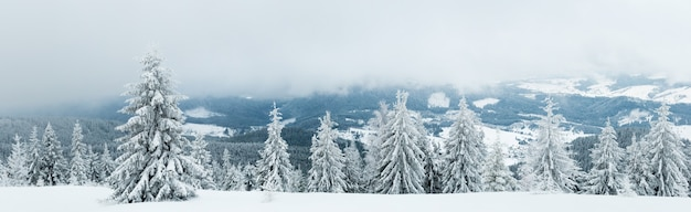 Ruwe winterlandschap prachtige besneeuwde sparren staan tegen een mistig bergachtig gebied op een koude winterdag.