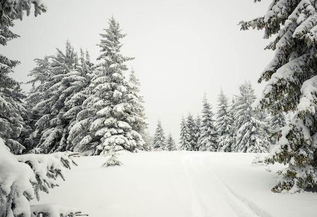 Ruwe winterlandschap prachtige besneeuwde sparren staan tegen een mistig bergachtig gebied op een koude winterdag