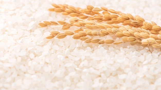 Ruwe wit gepolijst gemalen eetbare rijst gewas op witte achtergrond in bruine kom, biologische landbouw ontwerpconcept. hoofdvoedsel van azië, close-up.