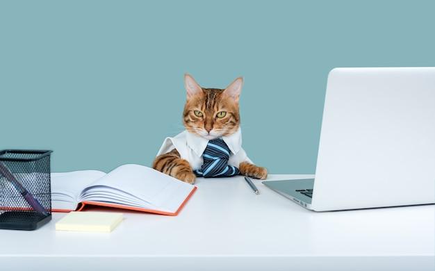 Saai werk. bengaalse kat is een zakelijke ondernemer. kat in een gelijkspel. pluizige baas op kantoor