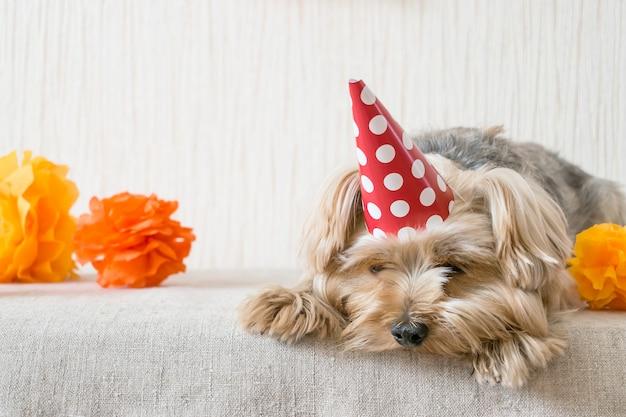 Sad yorkshire terrier (yorkie) hond in rode feestmuts glb ligt op tafel
