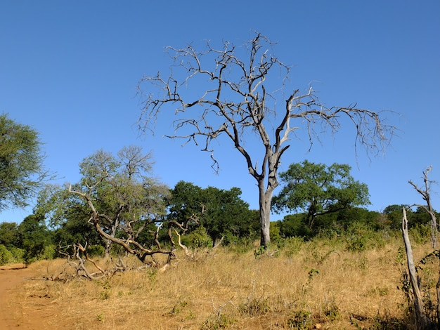 Safari in chobe national park, botswana, afrika