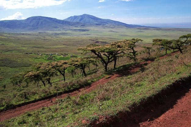 Safari in kenia en tanzania, afrika