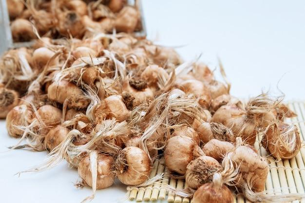 Saffraanbollen in een doos op een witte achtergrond. crocus sativus bollen worden voorbereid voor het planten.