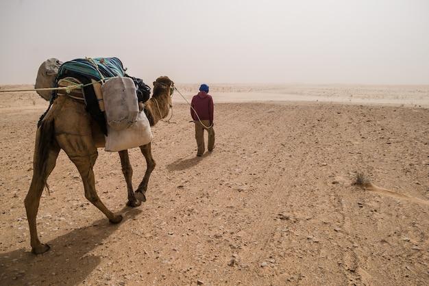 Sahara woestijngids en kameel