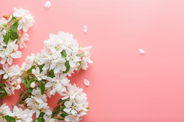 Sakura bloeien, lente bloemen op roze