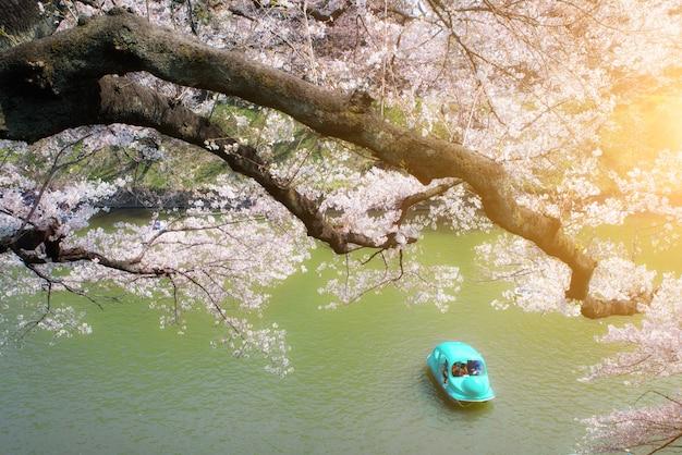Sakura bloesem verspreid over de boten worden gepaddeld op het kanaal
