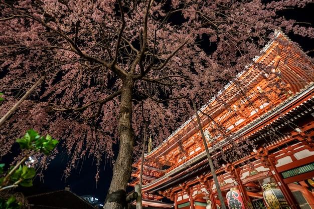 Sakura cherry blossoms bij de sensoji-tempel bij nacht in asakusa