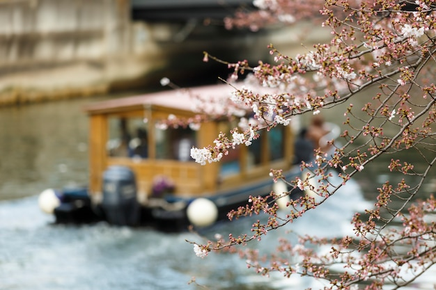 Sakura festival, toeristenboot in ooyokogawa-rivier