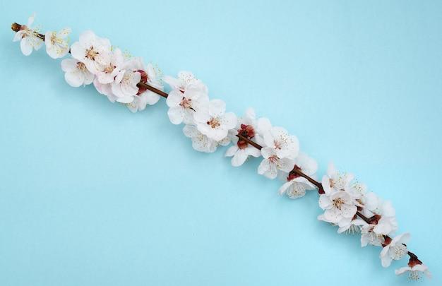 Sakura-filiaal