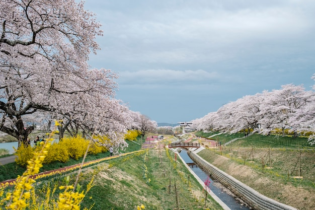 Sakura pad manier