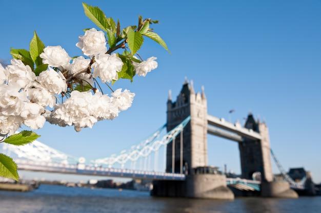 Sakura-tak in volle bloei door tower bridge