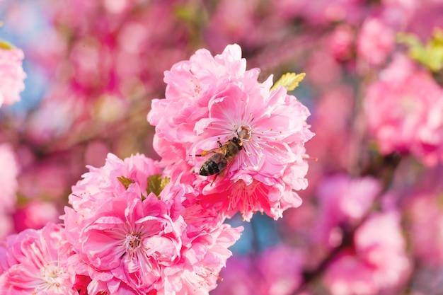 Sakura tak met roze bloemen erop