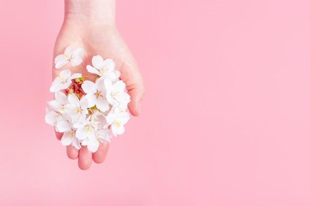 Sakuratak in vrouwelijke hand op roze achtergrond