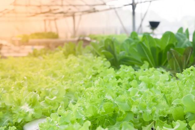 Saladegroenten in installatiekinderdagverblijf, gezond voedsel