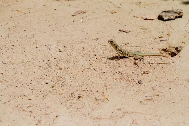 Salamander staat hoog