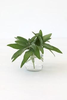 Salvia officinalis bos salie bladeren in een glas geïsoleerd op een witte achtergrond