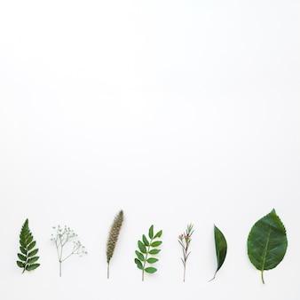 Samenstelling met bladeren