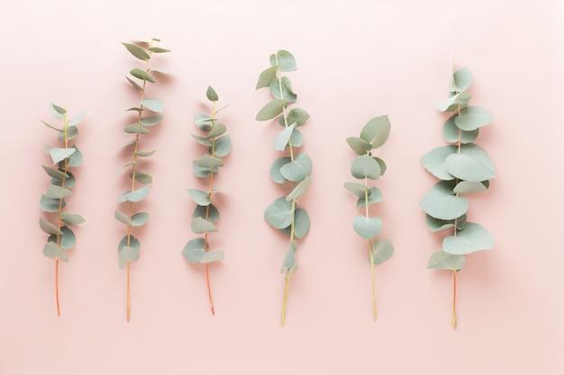Samenstelling van bloemen en eucaaliptus. patroon gemaakt van verschillende kleurrijke bloemen op witte achtergrond. plat lag stil leven.