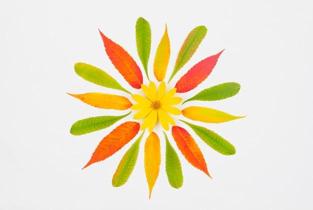 Samenstelling van de herfst, patroon van kleurrijke herfstbladeren en geel op een witte achtergrond, bovenaanzicht van plat leggen