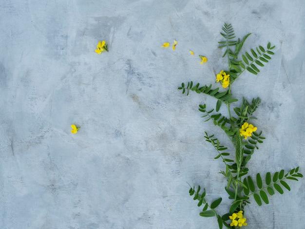 Samenstelling van de zomerbloemen op een grijze achtergrond.