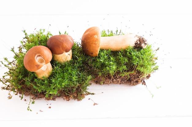 Samenstelling van drie witte bospaddestoelen op mos. witte houten achtergrond.