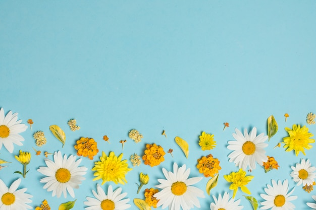 Samenstelling van mooie heldere bloemen