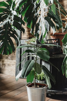 Samenstelling van tropische bladeren