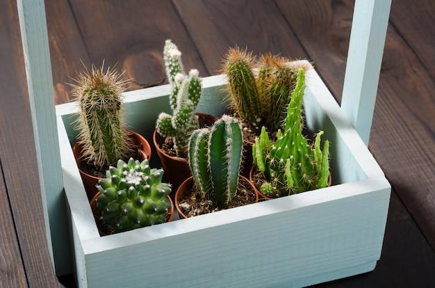 Samenstelling van verschillende cactussen in een houten blauwe bloemendoos
