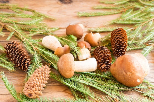 Samenstelling van witte bospaddestoelen op een houten dorpsachtergrond met vuren takken en kegels..