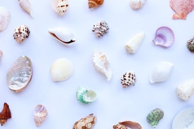 Samenstelling van zeesterren en exotische zeeschelpen op wit oppervlak