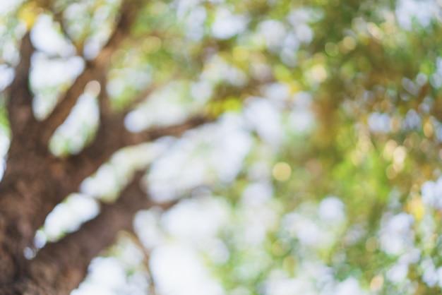 Samenvatting vaag bokeh van grote boom in heldere dag voor achtergrond