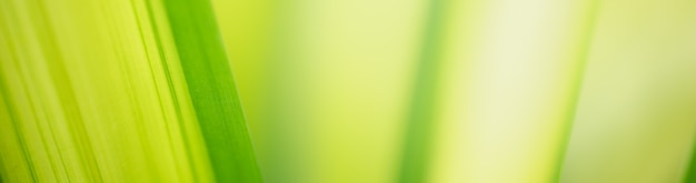 Samenvatting vaag van groene bladaard die als achtergrond natuurlijke installaties, het concept van het ecologiedekblad gebruiken.